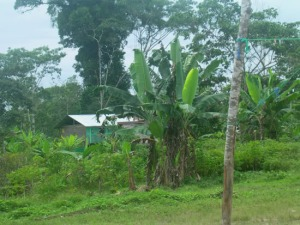 A Kichwa village in the Napo Province